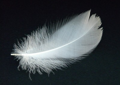 Witte veer